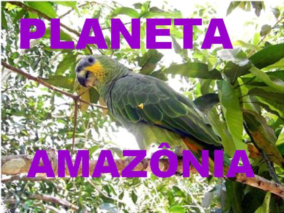 Présentation PPS de l'Amazonie